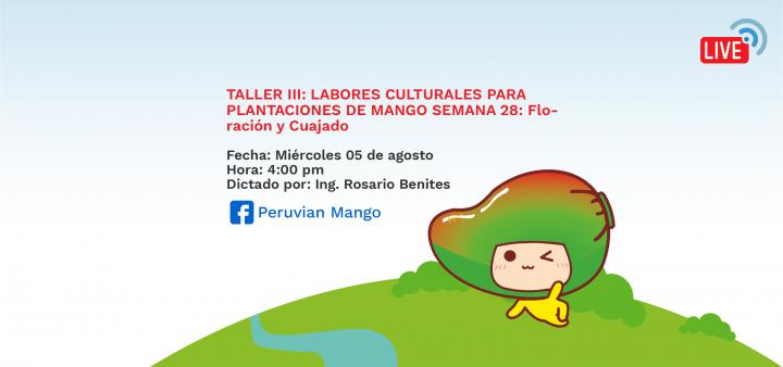 TALLER III: LABORES CULTURALES PARA PLANTACIONES DE MANGO SEMANA 28: Floración y Cuajado