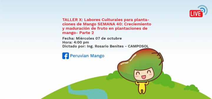TALLER X: Labores Culturales para plantaciones de Mango SEMANA 40: Creciemiento y maduración de fruto en plantaciones de mango- Parte 2