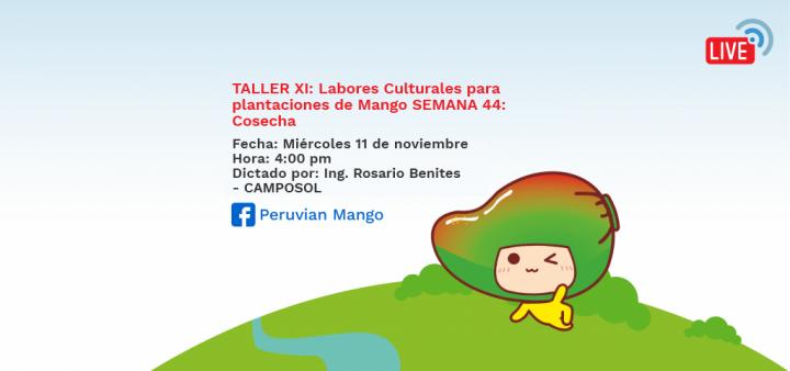 TALLER XI: Labores Culturales para plantaciones de Mango SEMANA 44: Cosecha